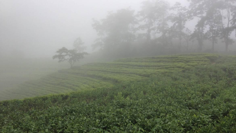 Top 10 van 's werelds beste theesoorten